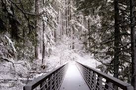 Winter landscape of <b>snow</b>-covered <b>forest</b> to the <b>bridge</b> with handrail ...