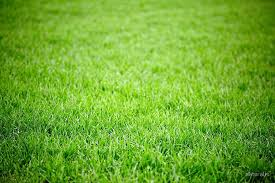 grass field background. Green Grass Field Background By Naturalis R