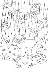 Kleurplaten Kleine Schattige Rode Panda In Het Forest