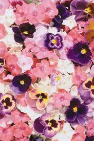 flower wallpaper iphone phone wallpaper iphone