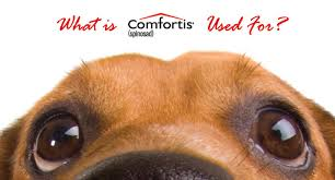 what is comfortis.  What How Does Comfortis Work And What Is O