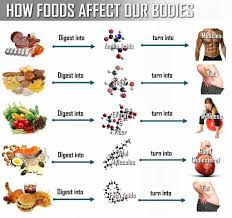 Fitness Diet Chart What Happens To Food After You Eat It Health Nutrition
