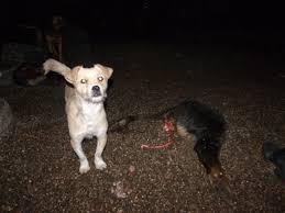 animal shelters sad.  Sad GEDSC DIGITAL CAMERA On Animal Shelters Sad