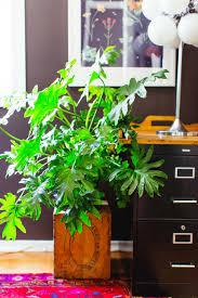 House-Plant-Care_-97 ...
