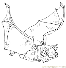 Small Picture Bat Coloring Page 12 Coloring Page Free Bat Coloring Pages