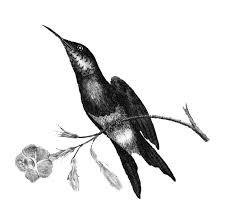 花と鳥を描いた手のイラスト ベクター画像 無料ダウンロード