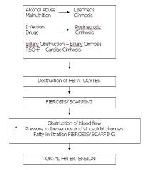 Pathophysiology Of Liver Cirrhosis In Flow Chart Liver Cirrhosis Case Study Page 2 Of 4 Nursing Crib