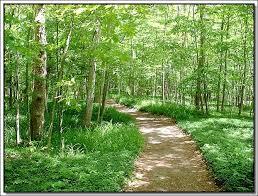 لكل محبي صور الطبيعة  اكبر تجميع لصور الطبيعة Images?q=tbn:ANd9GcRfTe_RbqAX5lZRsKSmguexaFmXhYGBQoUkKXnu71iZJjNkY20P