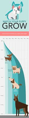 Use A Puppy Growth Chart To Determine Size Care Com