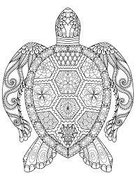 Elegant Hawksbill Turtle Coloring Pages Virancultureorg
