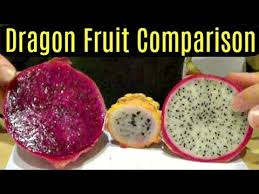 Yellow, Red and <b>White</b> Dragonfruit Comparison - Weird Fruit ...