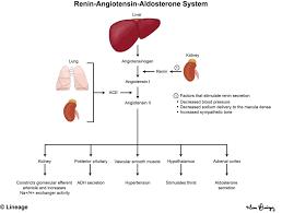 Renin Angiotensin Aldosterone System Renal Medbullets Step 1