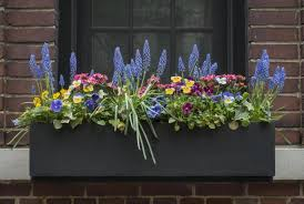 flowers for window boxes sun and