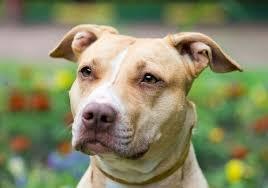 12 Year Us Dog Bite Fatality Chart Are Pit Bulls Dangerous Dog Bite Statistics Live Science