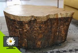 tree stump coffee table awesome tree trunk table 1