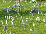 Darmowe Zdjęcia : Natura, trawa, kwitnąć, pole, trawnik, preria ...