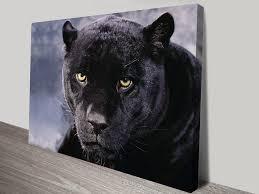 black panther animal wall art on canvas on black panther animal wall art with black panther canvas print sydney animal art on canvas