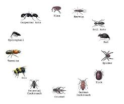 garden pest. Garden Pest Identification Design With Bed Bugs Control Landscape Pictures . I