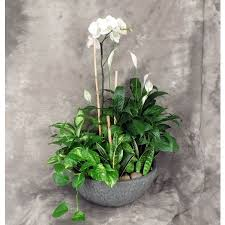 dish gardens. Ginormous European Planter In Decorative Pot With Orchid Plant Dish Gardens P