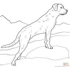 Dog Coloring Pages Labradorllll