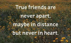 Short Best Friend Quotes Simple 48 Short Friendship Quotes To Share With Your Best Friend Cute