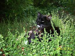 dog friendly ground cover.  Cover Best Ground Cover With Pets With Dog Friendly Ground Cover R