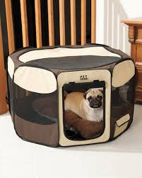 Luxury Dog Beds & Pet Furniture at TeaCups Puppies & Boutique