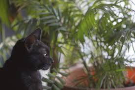 safest non toxic houseplants for cats and dogs