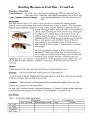fruit fly genetics lab report sisters quilting shoppe fruit fly genetics lab report