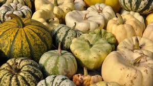 a guide to winter squashes