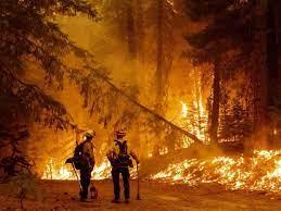 Dünya yanıyor: Birçok ülke orman yangınlarıyla mücadele ediyor