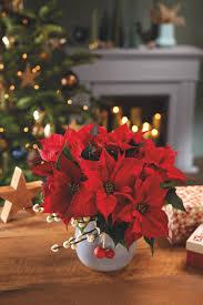 Poinsettia Christmas Tree Lights Uk Poinsettia Care Tips 9 Golden Rules For A Poinsettia Plant