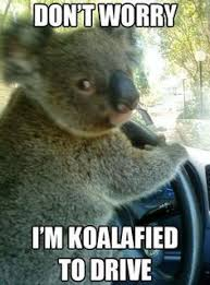 Koala Meme on Pinterest | Doge Meme, Bear Meme and Carmen Salinas Meme via Relatably.com