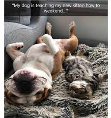 dopl3r.com - Memes - My dog is teaching my new kitten how to weekend..