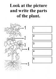 Small Picture English teaching worksheets Parts of a plant