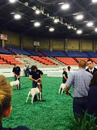 Keinan Boers - Avery Holman and Tobee Hagerman in the line up for division  5, three of the six were from our genetics | Facebook
