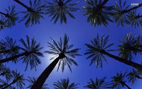palm tree wallpaper desktop