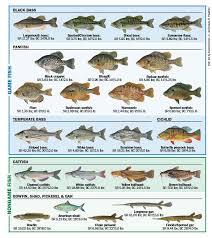 Freshwater Fish Of Florida Florida Freshwater Fishing