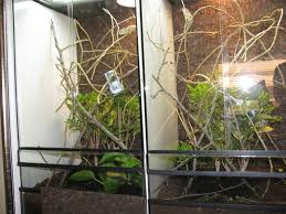 the mesh ventilation in these protean terrarium design terrariums is seen just above the soil below the sliding glass doors in the front