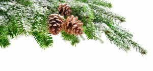 Bildergebnis für tannenzweig weihnachten