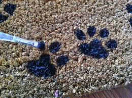 use a paw print stencil if you are too scared to wing it like we did randomly paint your paw prints in the available spaces and set aside to dry