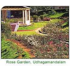 ooty hill station holiday tours ooty tourism travel  rose garden oody