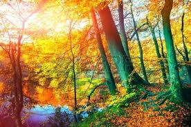 fall nature backgrounds. Fall Landscape Background Autumn With Forest Lake On Sunny Day Nature Photo Backgrounds