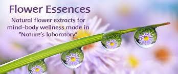 flower essence services bridging body