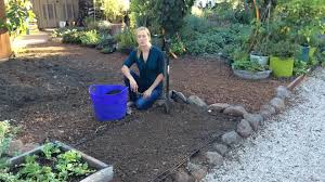 using coffee grounds in the garden