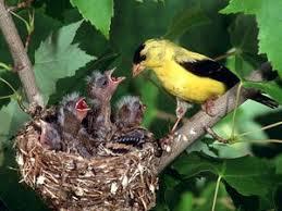 Offer Nesting Materials For Birds  Nest Bird And GardensBackyard Bird Watch