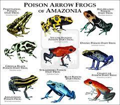 Poison Dart Frogs Of Amazonia Fine Art Print Poison Dart
