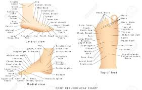 Reflexology Chart Reflex Zones Of The Feet Side Views Top