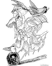Small Picture Hummingbird Coloring Page Color A Humming Bird Hummingbird