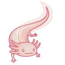 The two hour block was broken up. 21 Axolotl Ideas Axolotl Axolotl Cute Cute Drawings